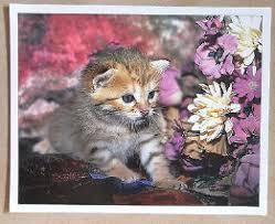chaton leboncoin