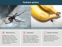 Spider Bites Healthdirect