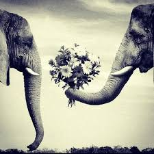 Elephant Quotes Delectable Elephant Quotes Tumblr Google Search On We Heart It