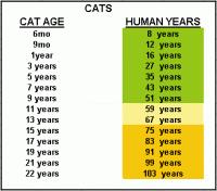 Cat Years Chart Age Cat Years To Human Years Chart