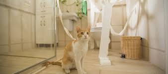 In a small house or tiny apartment, it can be hard enough to find space for  your own things, let alone the cat's litter box. But it's important to get  it ...
