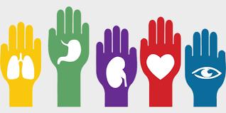 Resultado de imagen para donar organos salva vidas