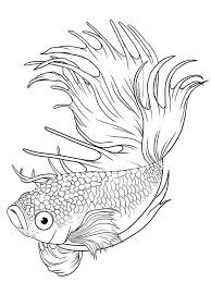 Small Picture Printable 34 Cute Fish Coloring Pages 8684 Simple Coloring Book