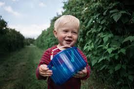 toddler picking fresh raspberries at garsons farm in esher