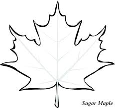 leaf color pages maple leaf coloring pages simplistic maple leaf coloring page printable pencil and in color maple maple leaf coloring pages free printable