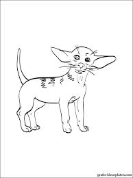 Kleurplaten Chihuahua Gratis Kleurplaten