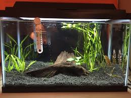Labyrinth Fish Tank Show Off Your Fish Tank Page 50 255241