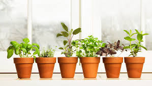 Small Picture Indoor Herb Garden Well Growing Tips FixCountercom Home Ideas