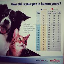 46 Expository 14 Years In Cat Years