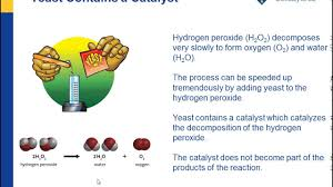 a catalyst and the rate of reaction american chemical society