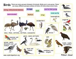 Bird Taxonomy Chart Classification Of Living Things Chart For A More Basic