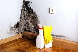 seemly bathroom wall mold removal how
