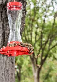 one other image of chandelier hummingbird feeders
