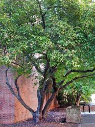 small trees for modern yards best