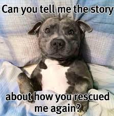 Rescue Dog Quotes Inspiration Funny Dogs Blog Cute Dog Quotes On Pinterest Pet Quotes