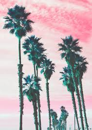 Models Palm Trees Tumblr Vertical Pink P And Image With Innovation Design