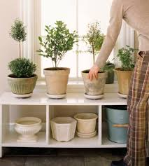 How To Use Plants as Feng Shui Cures. Bedroom Feng Shui
