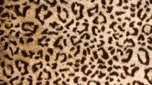 leopard print iphone background image hd