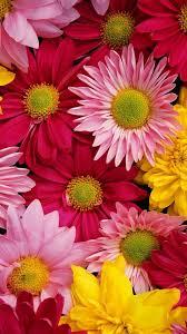 Cute Flower iPhone Wallpapers - Top ...
