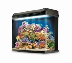 from the manufacturer reef ready aquarium