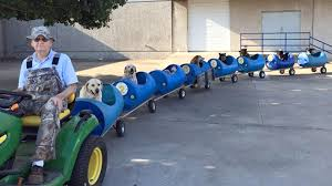 man rescues dogs takes them on dog train rides around texas man rescues dogs takes them on dog train rides around texas town today com