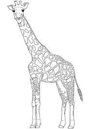 Giraffe Printable Template Free Outline Giraffe Cliparts Download Free Clip Art Free Clip Art