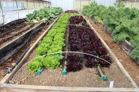 garden irrigation system.  System Crops With Only The Soaker Hose In Use With Garden Irrigation System