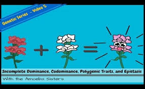 Science > biology > genetic basis of inheritance > dominance and codominance. Incomplete Dominance Codominance And Polygenic Genetics Dokterandalan