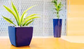 office flower pots. Office Plants In Blue Pots Supplied By Phs Greenleaf Flower L