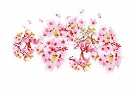 Bunga Sakura Cherry Blossom Petal Png Png Bunga Sakura Vector 414703