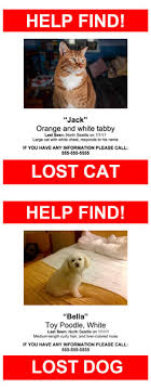 Missing Cat Poster Template Lost Pet Poster Template