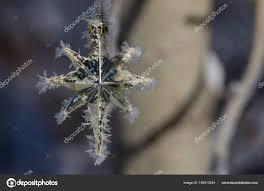 Goldene Frost Bedeckt Weihnachtsstern Dekoration Einen