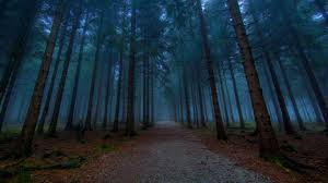 wallpapers hd forest. Wonderful Forest Dark Forest 23 HD Images Wallpapers  Image Wallpaper And Hd