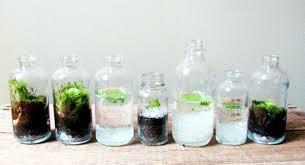 Decorative Milk Bottles Terrarium designs serve as decorative mini garden in the interior 49