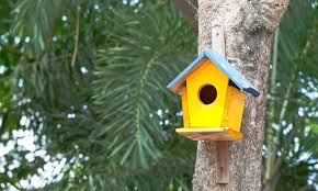 How to Hang a Birdhouse Without Harming a Tree