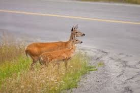 Fawn Age Chart Facts About Deer Live Science