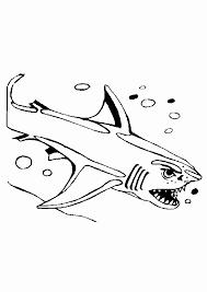 Kleurplaat Haai Fris Kleurplaten Haaien Nieuw Haaien Kleurplaten