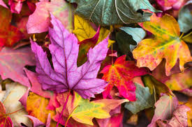 inspirational fall quotes for career development idealist careers