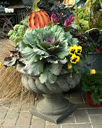 Fall Container Wow In 3 Easy Steps  Fall Containers Plants And Container Garden Ideas For Fall