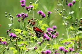 erfly gardening in houston
