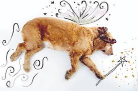 It's not magic: The skinny on treating canine atopic dermatitis