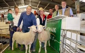 Annual ram sale a success   Naracoorte Herald   Naracoorte, SA