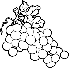 Small Picture Wine Grapes on the Vine Coloring Pages Color Luna