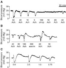 Blood Pressure Recording A Representative Arterial Blood Pressure Recording From Bothrops