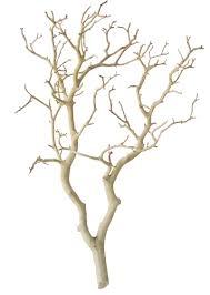 Sandblasted Manzanita Branches, 24 inches tall