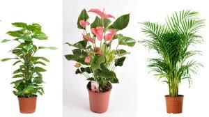 best indoor plants for office. 1524151052_maxresdefault.jpg?resize\u003d1280,720\u0026ssl\u003d1 Best Indoor Plants For Office