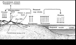 Вода как среда обитания Реферат В водной среде обитает около 150 000 видов животных и 10 000 растений что составляет соответственно всего 7 и 8 % от общего числа видов Земли На основании