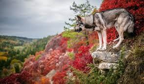 outdoor desktop backgrounds. Colorful, Nature, Dog, Outdoors, Animals HD Wallpaper Desktop Background Outdoor Backgrounds