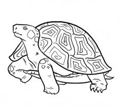 Small Picture How to Draw Turtles Step by Step Reptiles Animals FREE Online