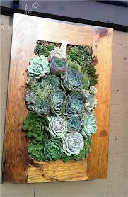 Succulent wall frame Rogers Gardens|Corona Del Mar, CA
